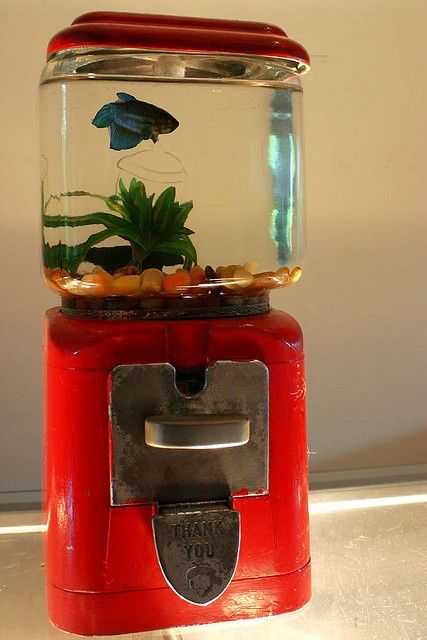 gumball aquarium...I would totally let a fish in my house with one of these