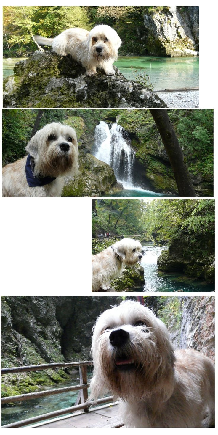 Ziggy's Slovenian holiday.