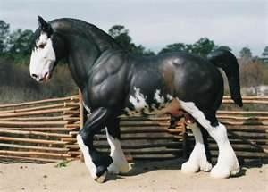 Clydesdale Horses Dogs Cats And Everything In Between