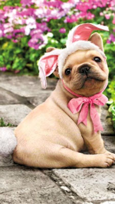 Dog With Bunny Tail Funny Easter Card - Greeting Card by Avanti Press