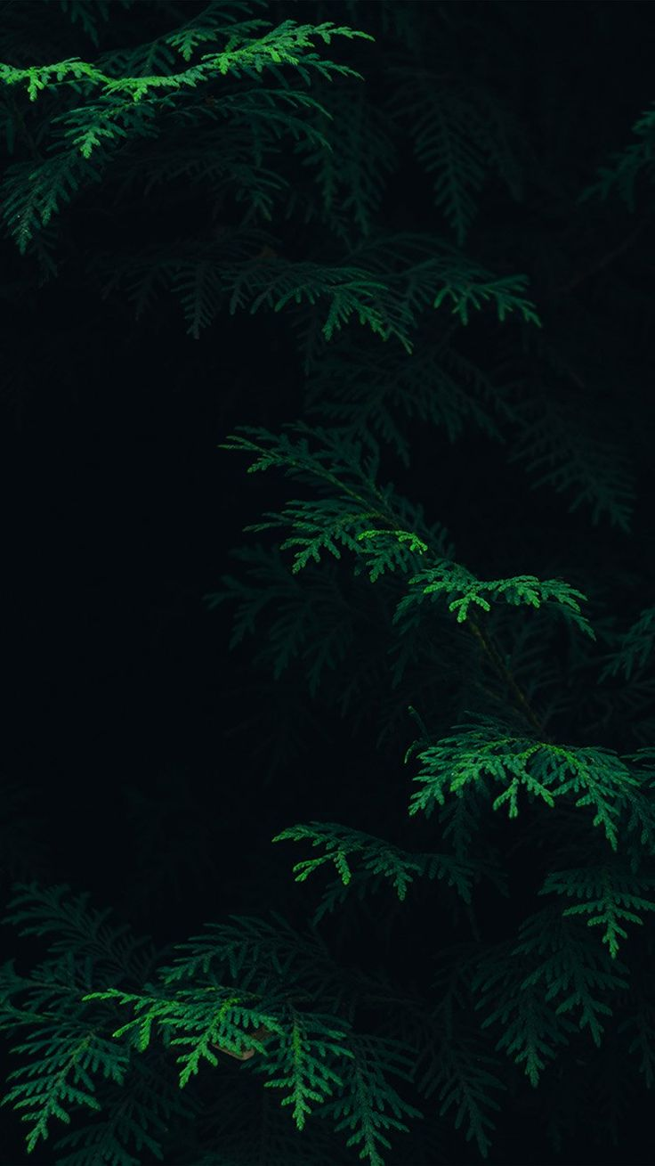 Get Wallpaper: http://bit.ly/2fTZPIe vs89-tree-leaf-green-pattern-nature-dark via http://iPhone6papers.com - Wallpapers for iPhone6 & plus