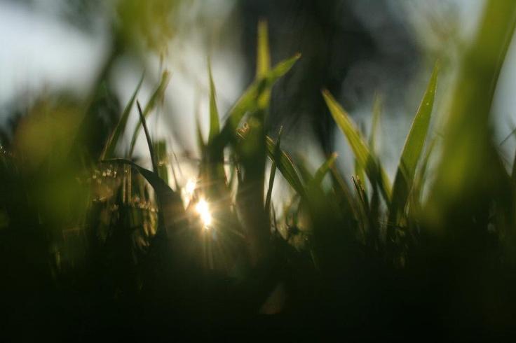 the prairie.   photo credit: amanda may