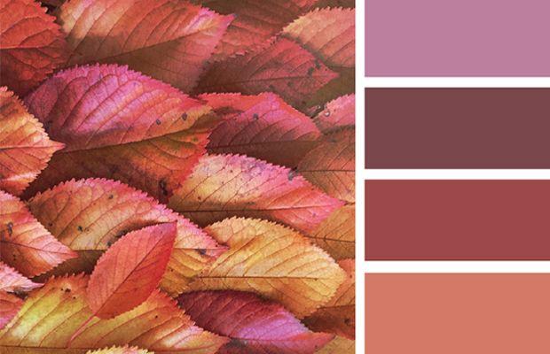 Design Seeds é umsite de inspiração que transforma as cores vistas em fotografias da natureza em paletas coma mesma estética propositalmente.