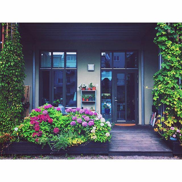 Siste rest av sammer'n på terrassen. #marissjokoladefabrikk #outdoorplants #urbanjungle #urbanjunglebloggers #boligplussminstil #hage #stakkarsoss #hortensia #hortensia #plantsrule #plantlove #boligpluss_planter #rom123hage #plantsrule #plantlove #boligpluss_planter #rom123hage #garden #gardenlife #klatreplanter #instaflowers