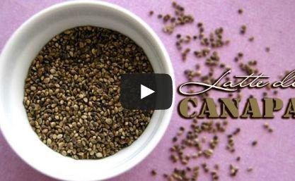 Latte di semi di canapa fatto in casa (hemp milk)