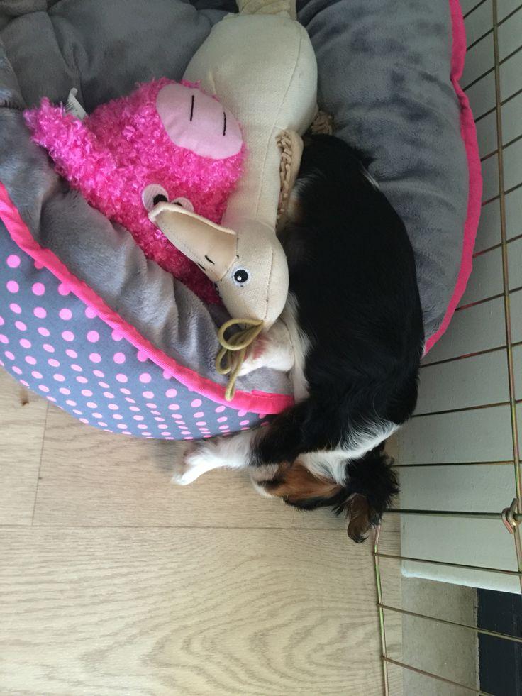 Puppy sleeping positions.