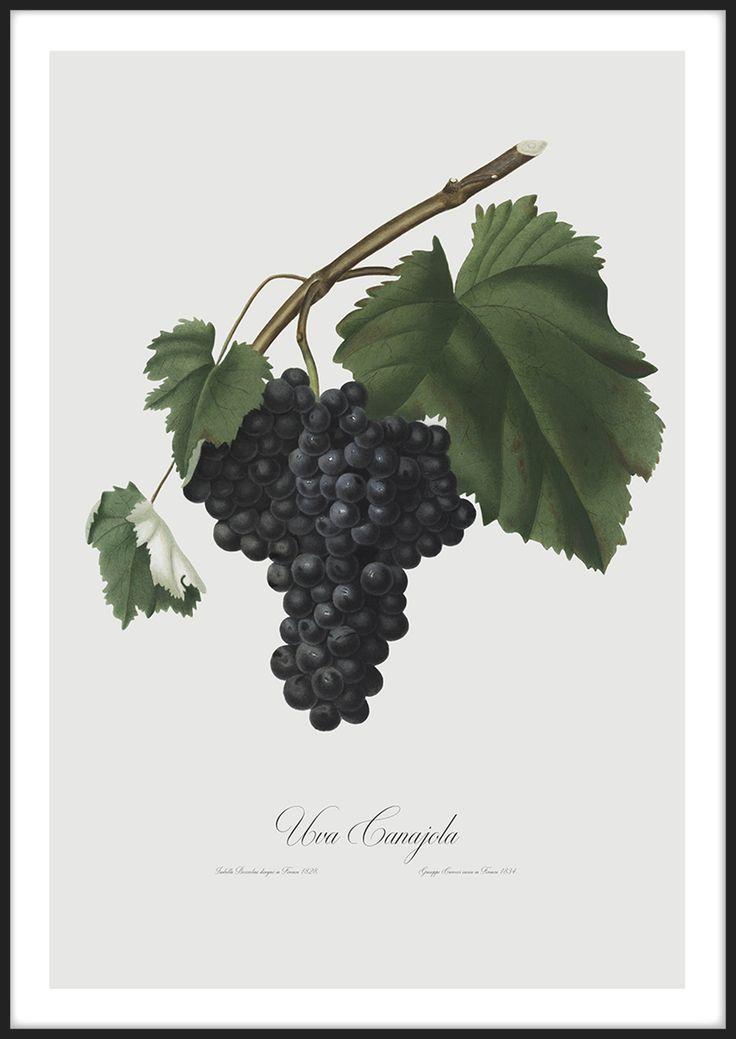Blue Grapes tavla från Insplendor tryckt med Giclée Fine Art Print-teknik
