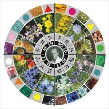 DE TODO UN POCO: Flores de Bach: una para cada signo.