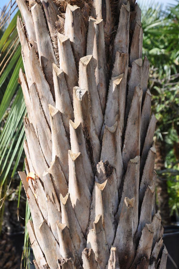Die besten 25 Bambus Palm Ideen auf Pinterest