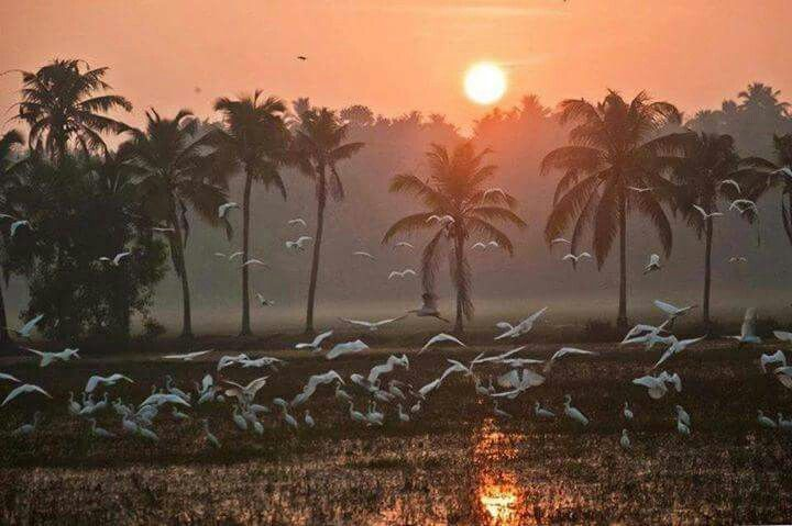 Sunset view in Kerala