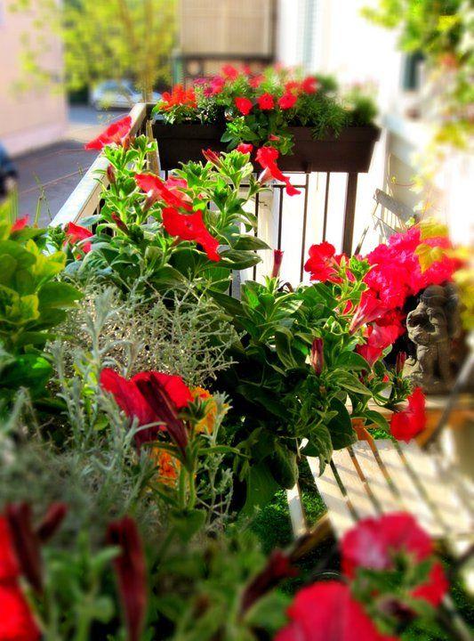 17 meilleures id es propos de jardini res d 39 t sur pinterest fleurs dans bo te de fen tre - Idee composition jardiniere exterieure ...