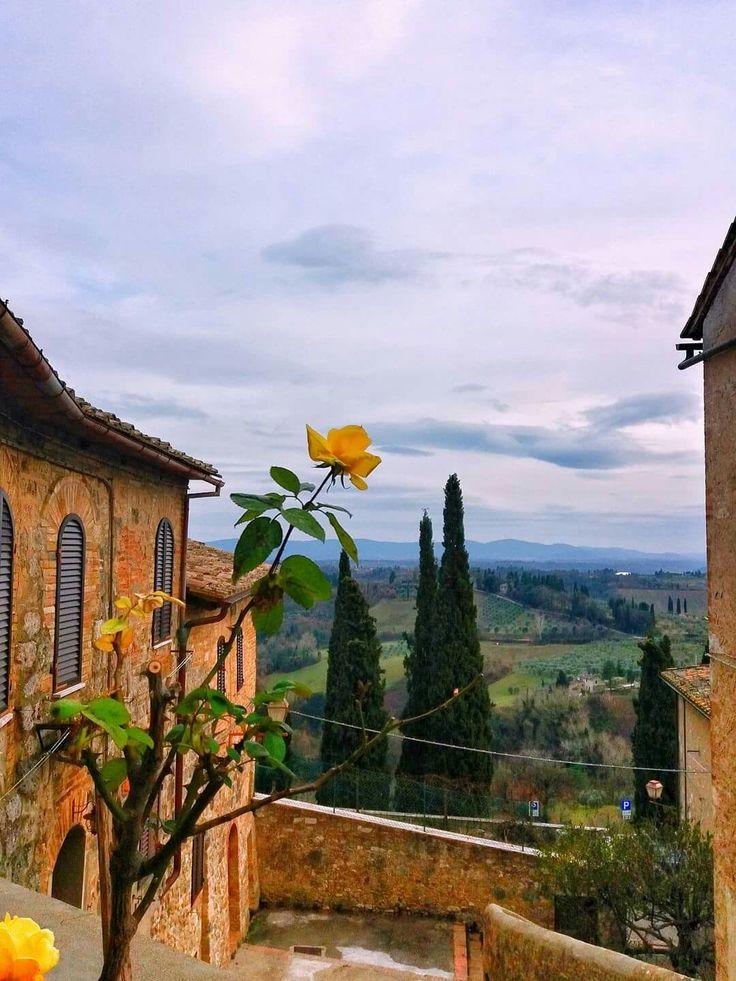 Ed è una rosa gialla a fare di una giornata grigia..una macchia di colore.. ...in gennaio....a s.Gimignano
