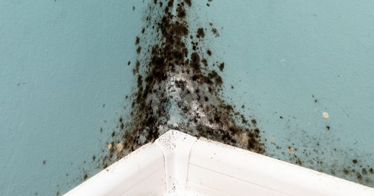 black mold - Google Search (With images)   European ...