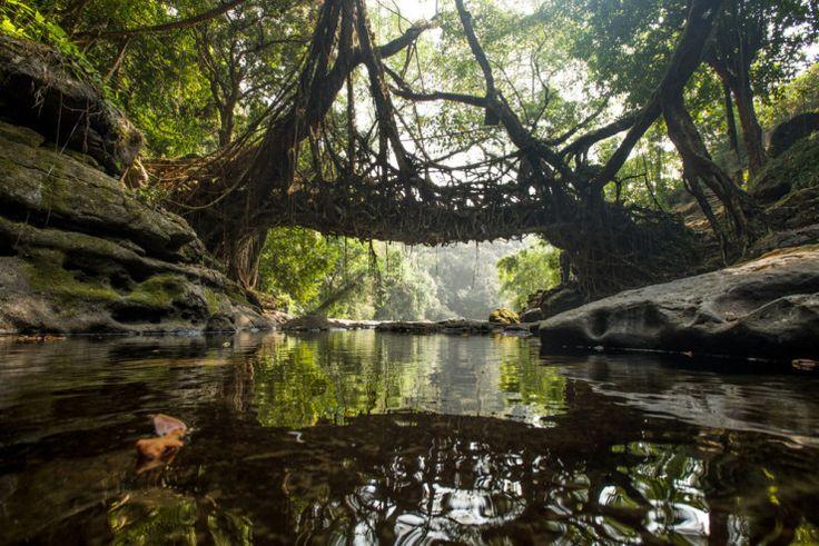 Tree Root Bridges, Cherrapunji, Meghalaya!