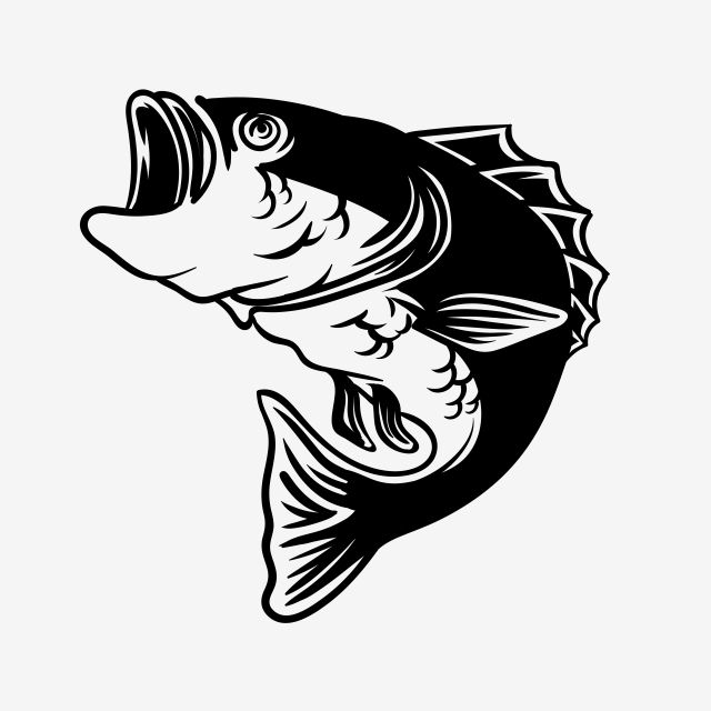 Cool Bass Fish Detail Vector Illustration For Fishing Hobby Fish Clipart Bass Fish Png And Vector With Transparent Background For Free Download Vector Illustration Tshirt Printing Design Fish Clipart