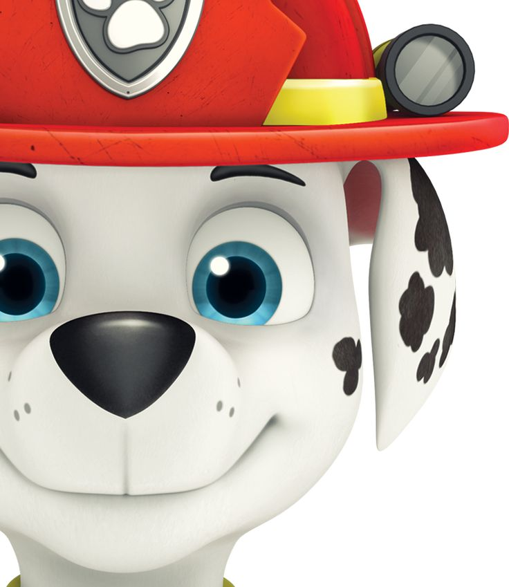 Did you know that PAW PATROL  is on tour and headed for Kitchener Ontario Canada?!?!?!    This Saturday and Sunday September 16 and 1...