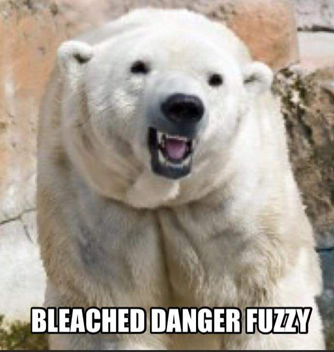 Regular animal names are boring. Let's replace them with names that are creative and stupid instead!