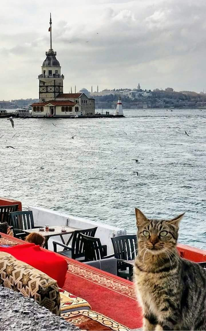 """We have great views here; let me show you to your table."""