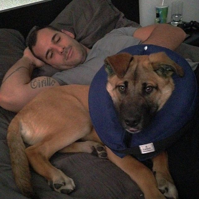 Nathan Cirillo with one of his rescue dogs
