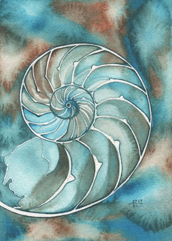 NAUTILUS 5 x 7 print of detailed watercolour artwork in turquoise olive green aqua blue and rustic earth tones