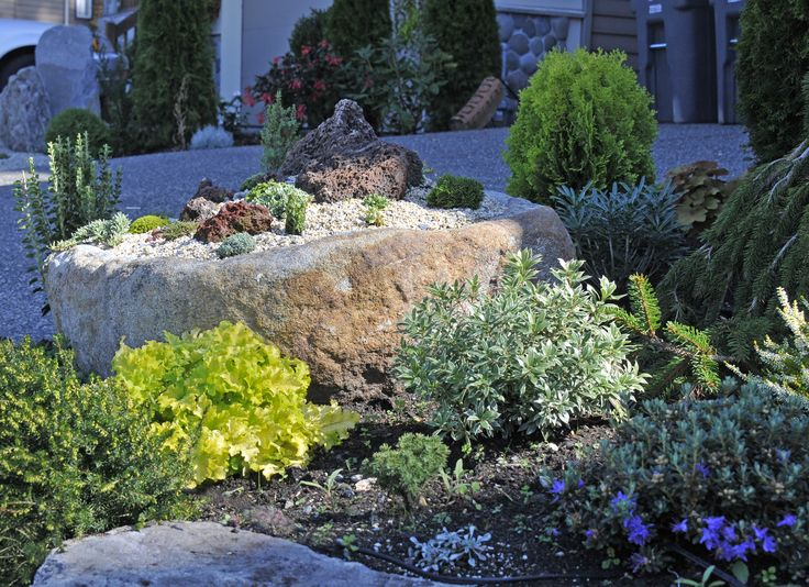 An alpine garden includes different levels, rocks, and interesting pieces like lava rock.