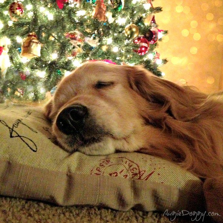 #Golden #Christmas Dreams