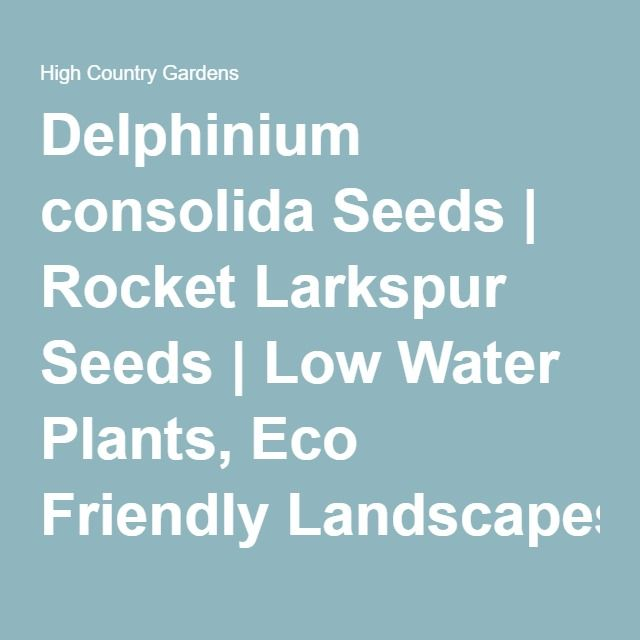 Delphinium consolida Seeds   Rocket Larkspur Seeds   Low Water Plants, Eco Friendly Landscapes   Wildflower Seeds from…