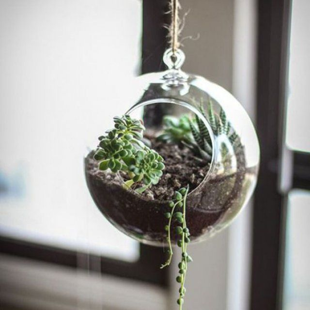 les 25 meilleures id es concernant terrarium suspendu sur pinterest plantes suspendues d cor. Black Bedroom Furniture Sets. Home Design Ideas