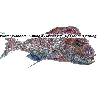 surf rigs , flasher rigs ,snapper snatchers ,winter tailor, winter fishing , surf rigs, flasher rig,