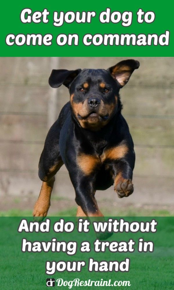 How To Teach A Dog To Come Without Treats Dog Training Tips Dog