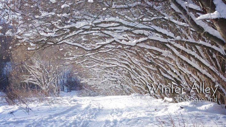 "Snow Alley in Winter Garden, From ""Winter"" video collection #winter #snow #alley #wintervideo #videoblocks"