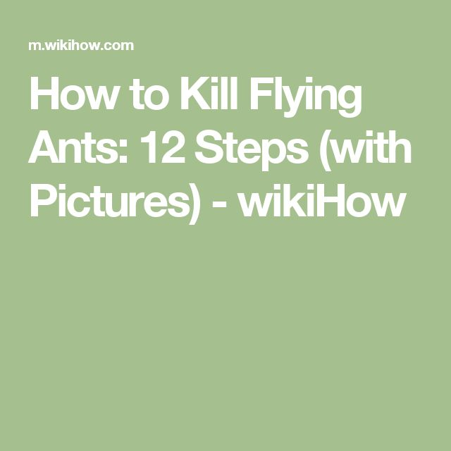 How to Kill Flying Ants: 12 Steps (with Pictures) - wikiHow