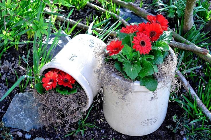 flowers in crocks - love!