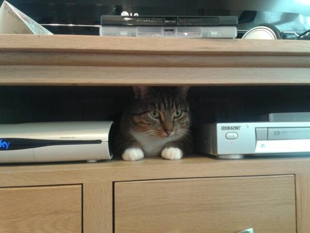 Appliance cat?