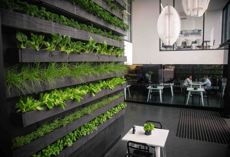 Edible Green Wall for Como St Cafe - Created by Ryan McQuerry from Outside In