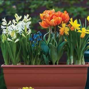 Spring Sensation 1 Pre Planted Trough All you have to do is position them and waterEach trough comes pre-planted with plants, compost, FREE Raingel and feed treatment. Care instructions included.These spring bulbs offer quick and easy gar http://www.MightGet.com/january-2017-11/spring-sensation-1-pre-planted-trough.asp