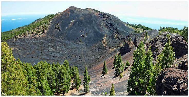 Lac de lave (La Palma - Canaries) Pins endémiques des Canaries poussant sur les zones volcaniques. En bas, un lac de lave dominé par le volcan Déseada (1948 m)
