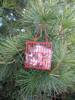 dryer lint in suet feeder - for birds' nests