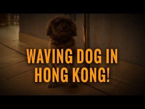 Weird Waving Dog in Hong Kong! #WTF #China #Dog