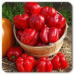 Organic King Crimson Bell Pepper $3.95 for 64 oz