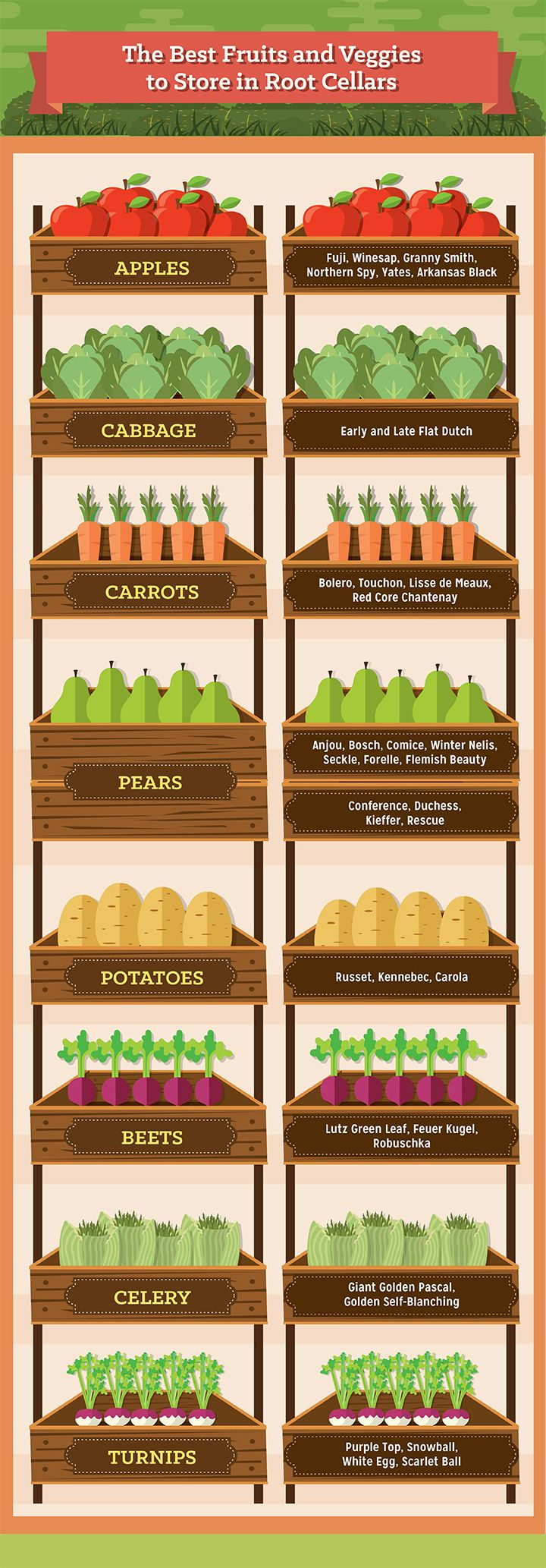 Thinking of building a root cellar? These are some of the best fruits and vegetables you can store in one.  Also has a cool guide to building a simple one with a trash can!