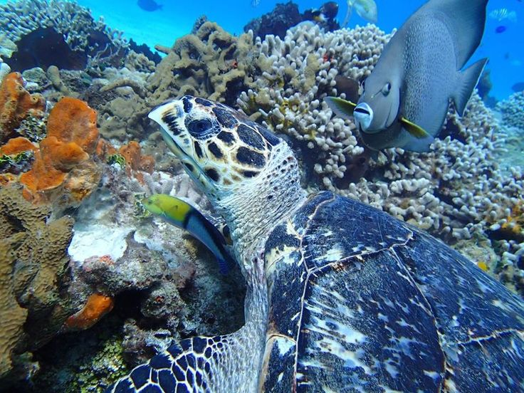 discover scuba cozumel introductory to scuba diving in cozumel mexico