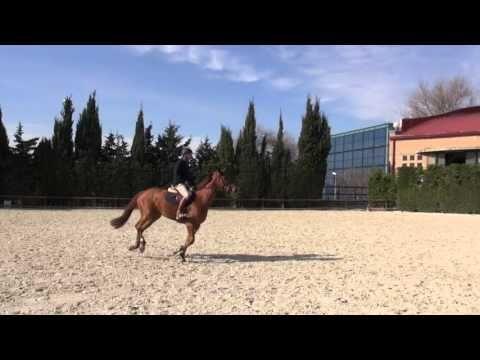 Cadencia y serenidad imprescindible para saltar grande.  Mantenerse serenos delante del obstáculo. Con ello lograrás que tu caballo se exprese y salte mejor. Cadencia y serenidad dos conceptos claves que debemos dominar para lograr el mejor salto.
