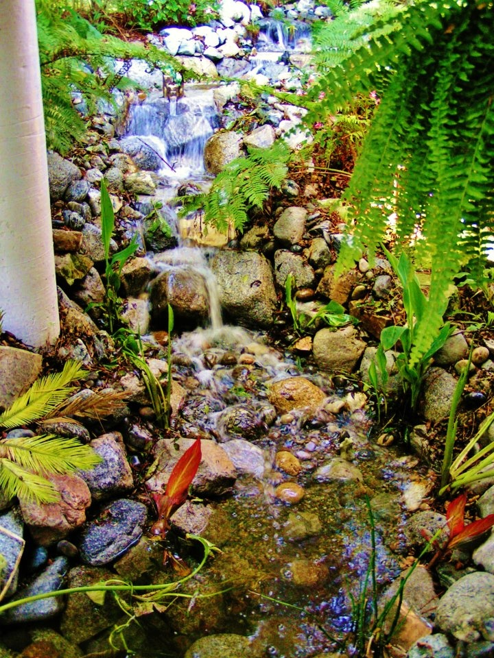 19 best serene landscapes images on pinterest los angeles back yard waterfall in redondo beach california httpenviroscapela ccuart Images