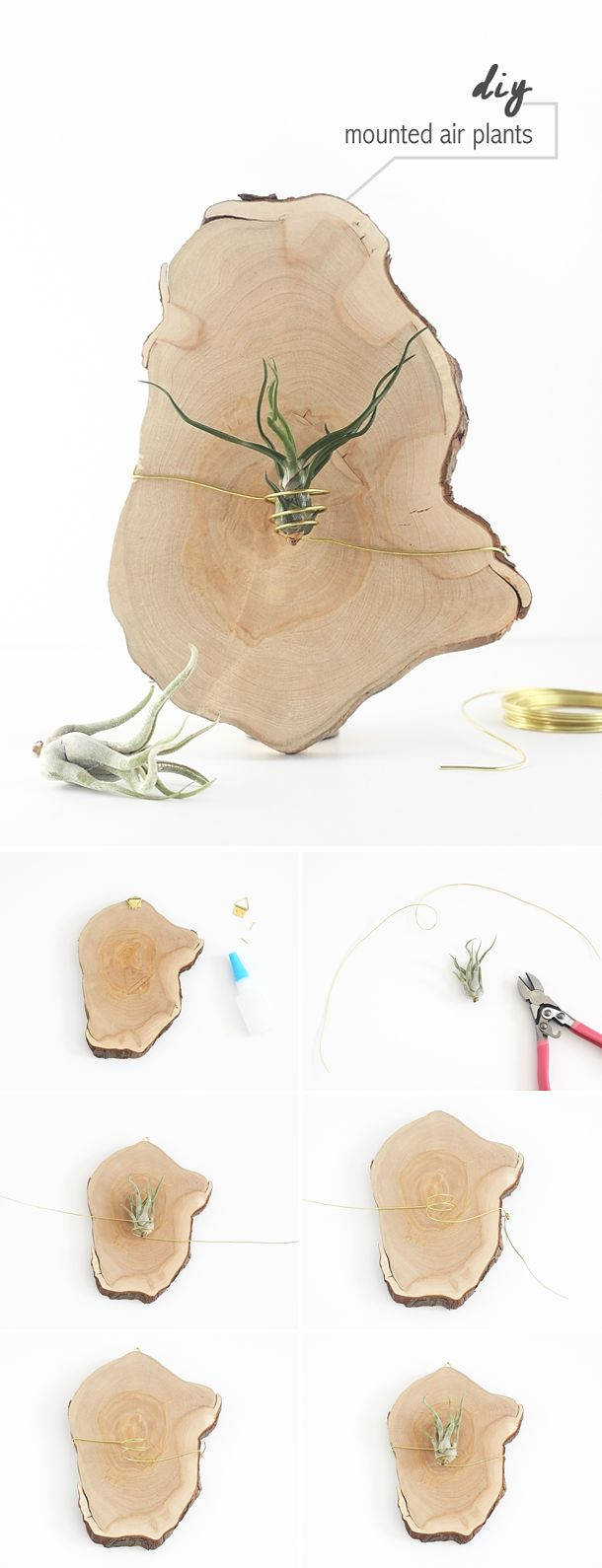 DIY Mounted Air Plants by Idle Hands Awake