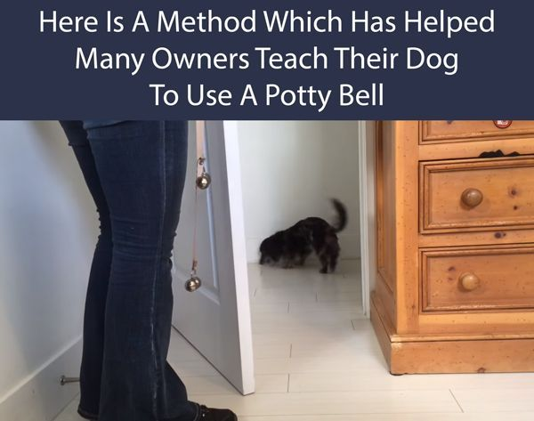 Train Your Dog To Use A Potty Bell To Go Outside Training Your