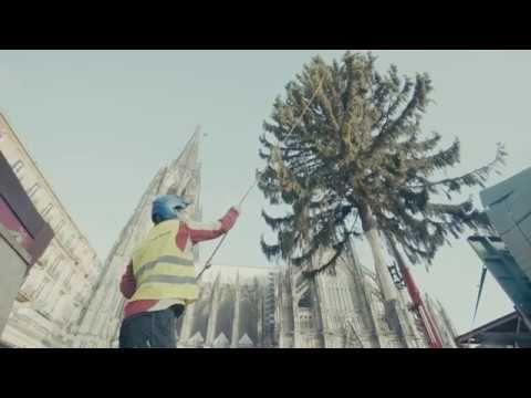 Der Baum 2017 steht! NRWs höchster natürlicher Weihnachtsmarktbaum auf d...