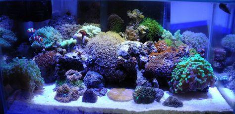 Fluval Edge Tank Thread - Page 13 - Members Aquariums - Nano-Reef.com Forums