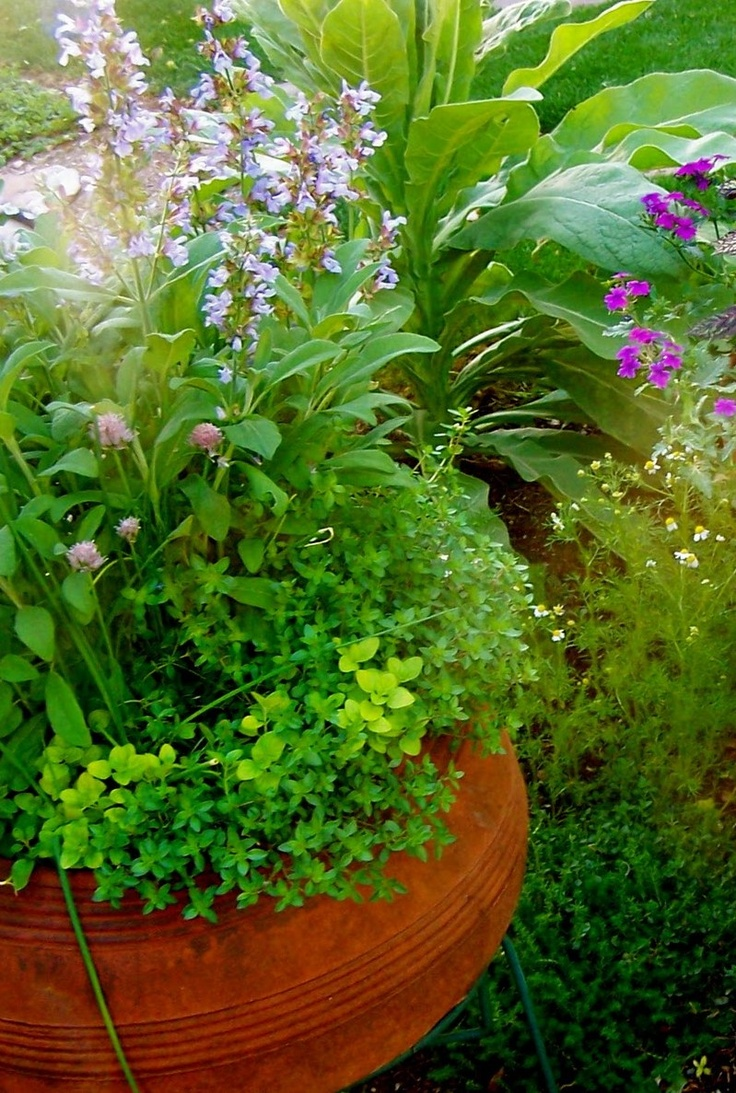 Garden Bush: 10 Best Images About Edible Container Gardens On Pinterest