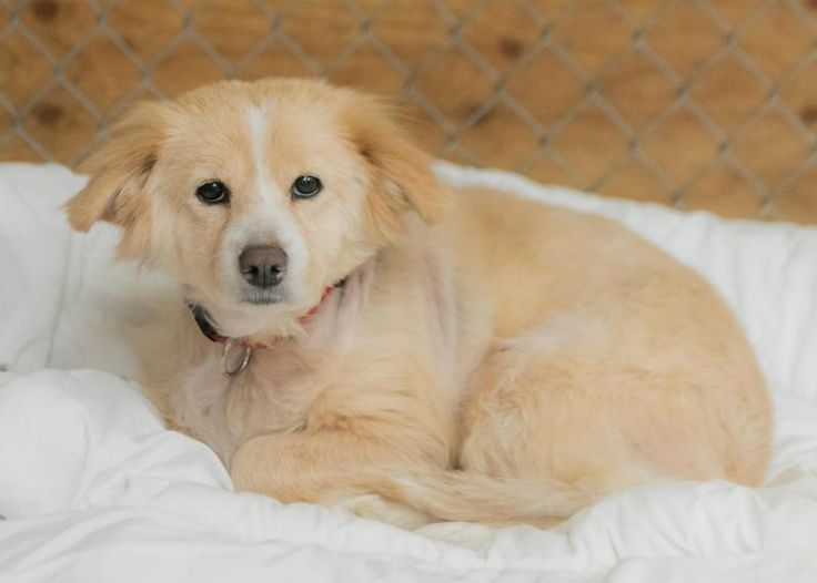 Meet Sophie, an adoptable Cocker Spaniel looking for a forever home. If you're looking for a new pet to adopt or want information on how to get involved with adoptable pets, Petfinder.com is a great resource.